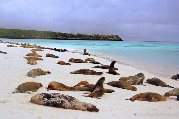 08c_Sea-lions-in-Galapagos-Islands