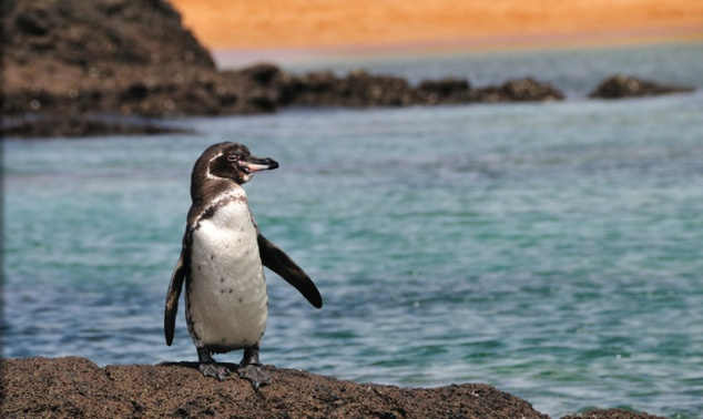 Galapagos-Islands-penguin-rocks