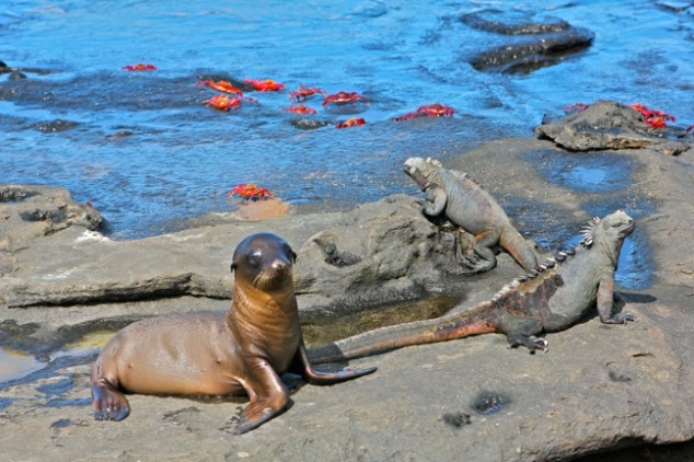 nature-travel-galapagos-islands